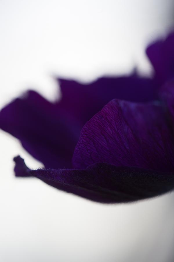 anemon_-3