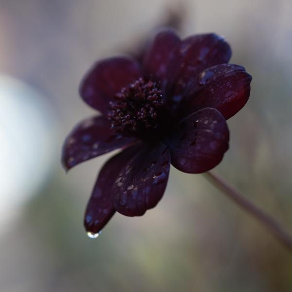 sista blommorna-3