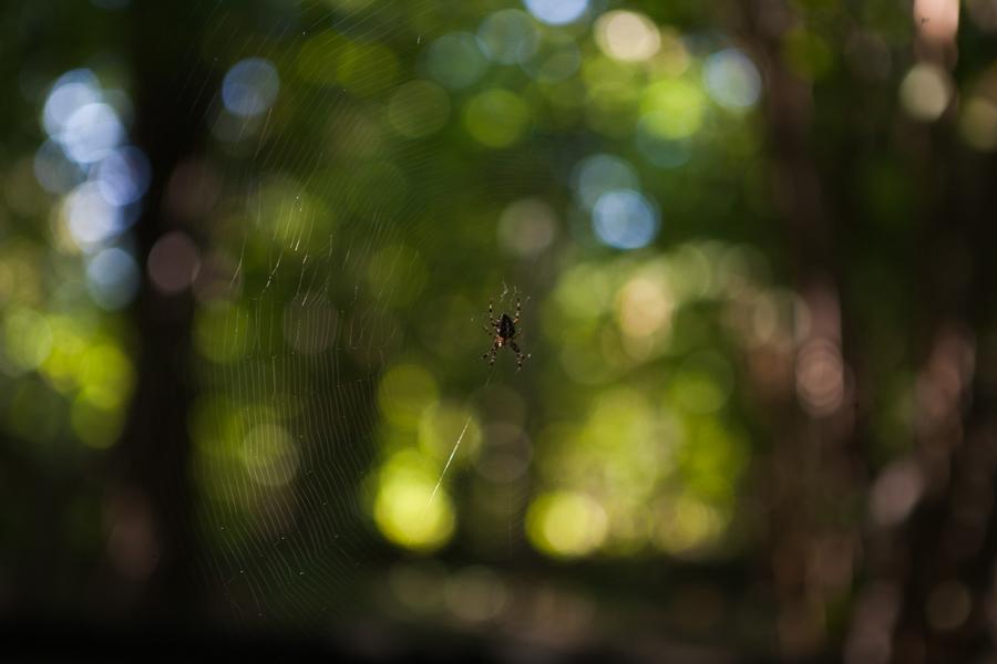 spindel i natet