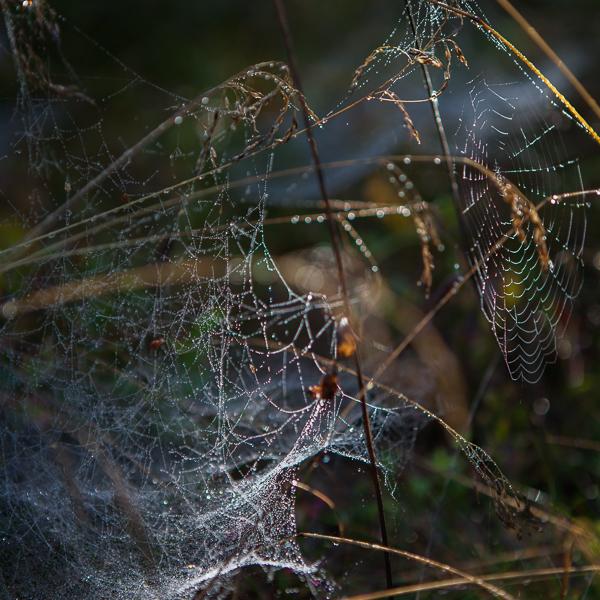 spindel vav-5