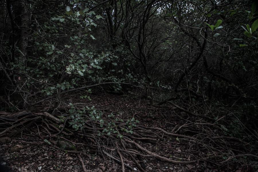 skogen-3