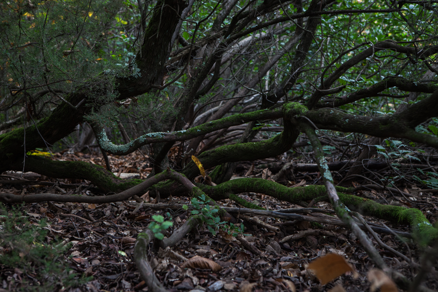 skogen-5