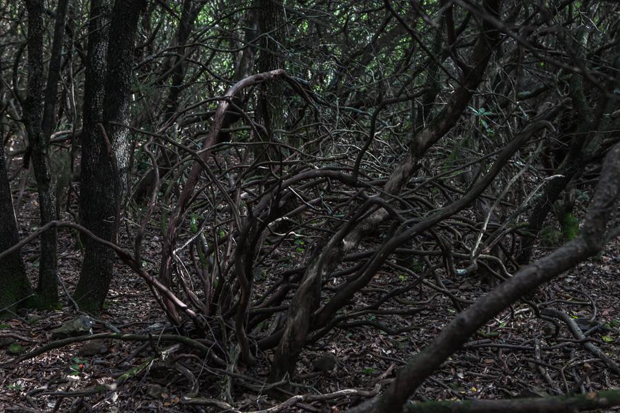 skogen-8
