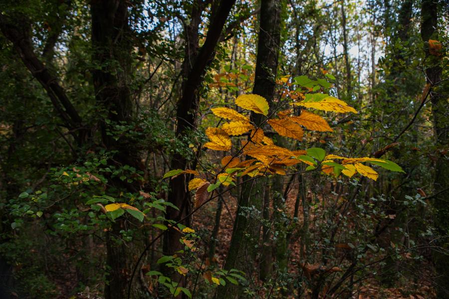 skogen 2-9