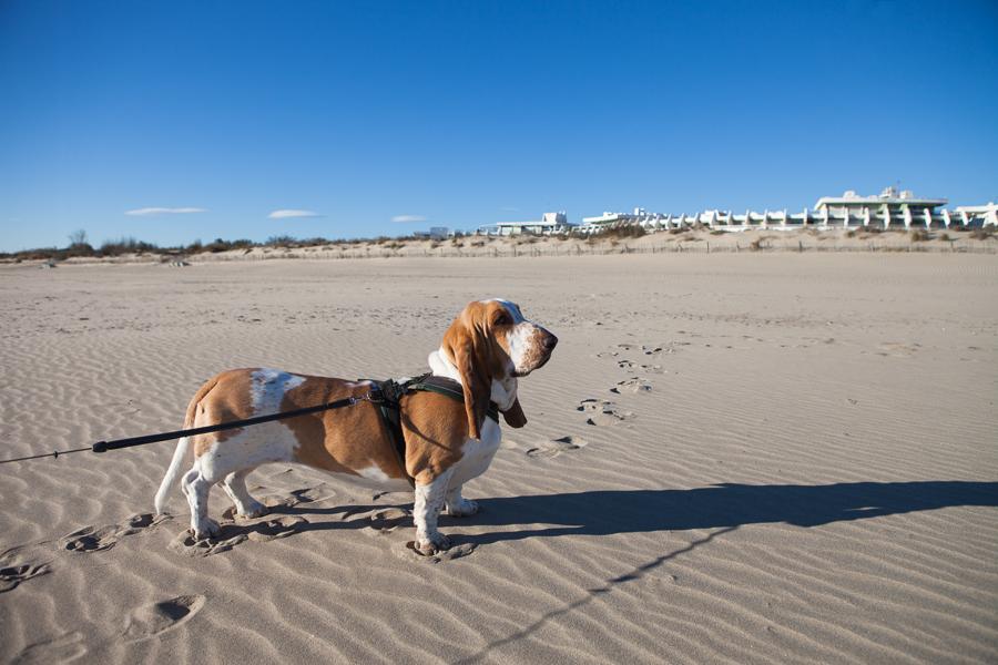 stranden grande motte-8