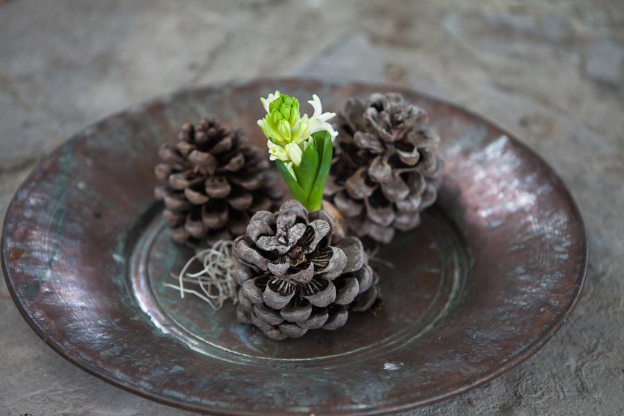 vit hyacint