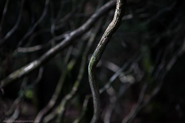 trollskogen-9
