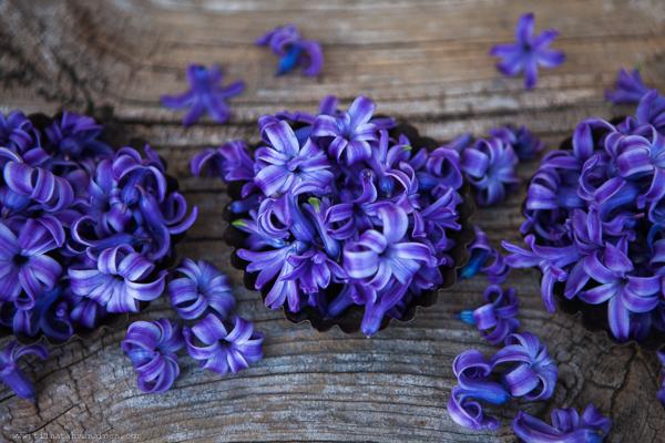 bla hyacint-5