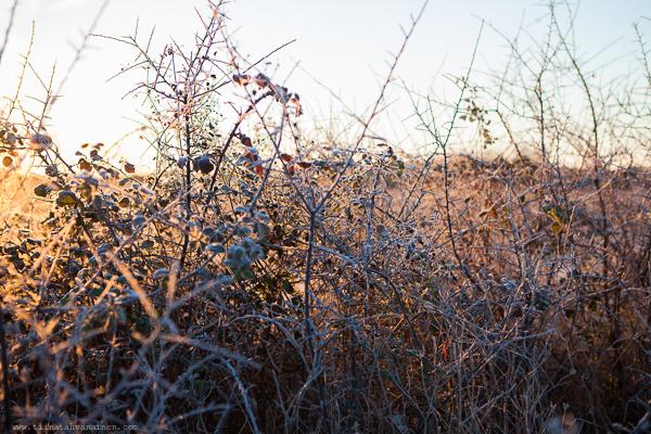 frostmorgon-10