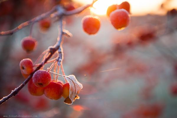 frostmorgon-2
