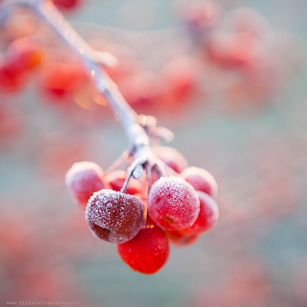 frostmorgon-3