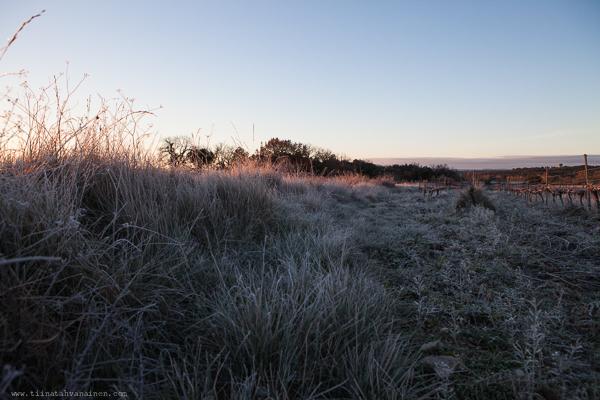 frostmorgon-8