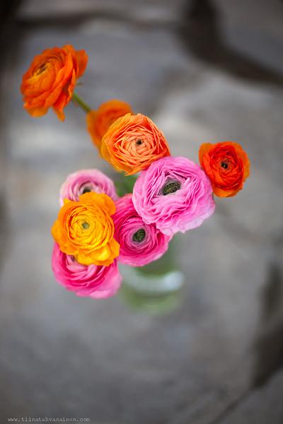 rosaorange ranunkler