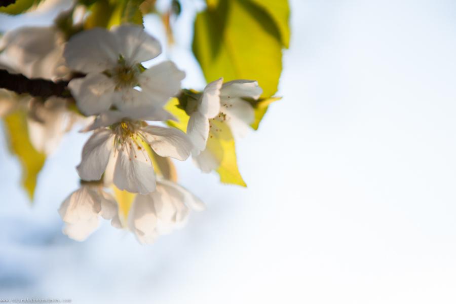blomning-3
