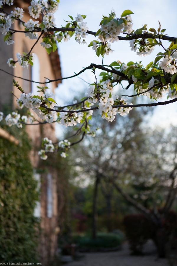 blomning-4