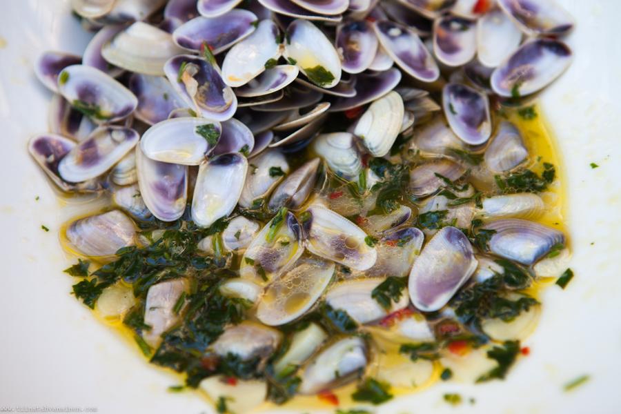 clams-2
