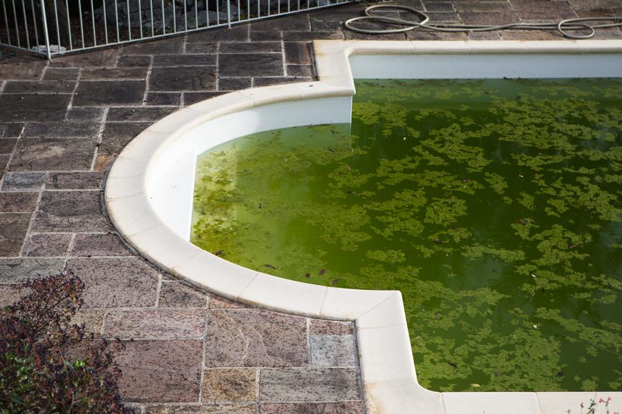 grannens pool